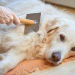 Tips for Handling Dog Shed