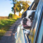 Happy Howlidays- How to prep your pet for holiday travel