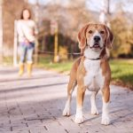 4-Benefits-of-Walking-Your-Dog